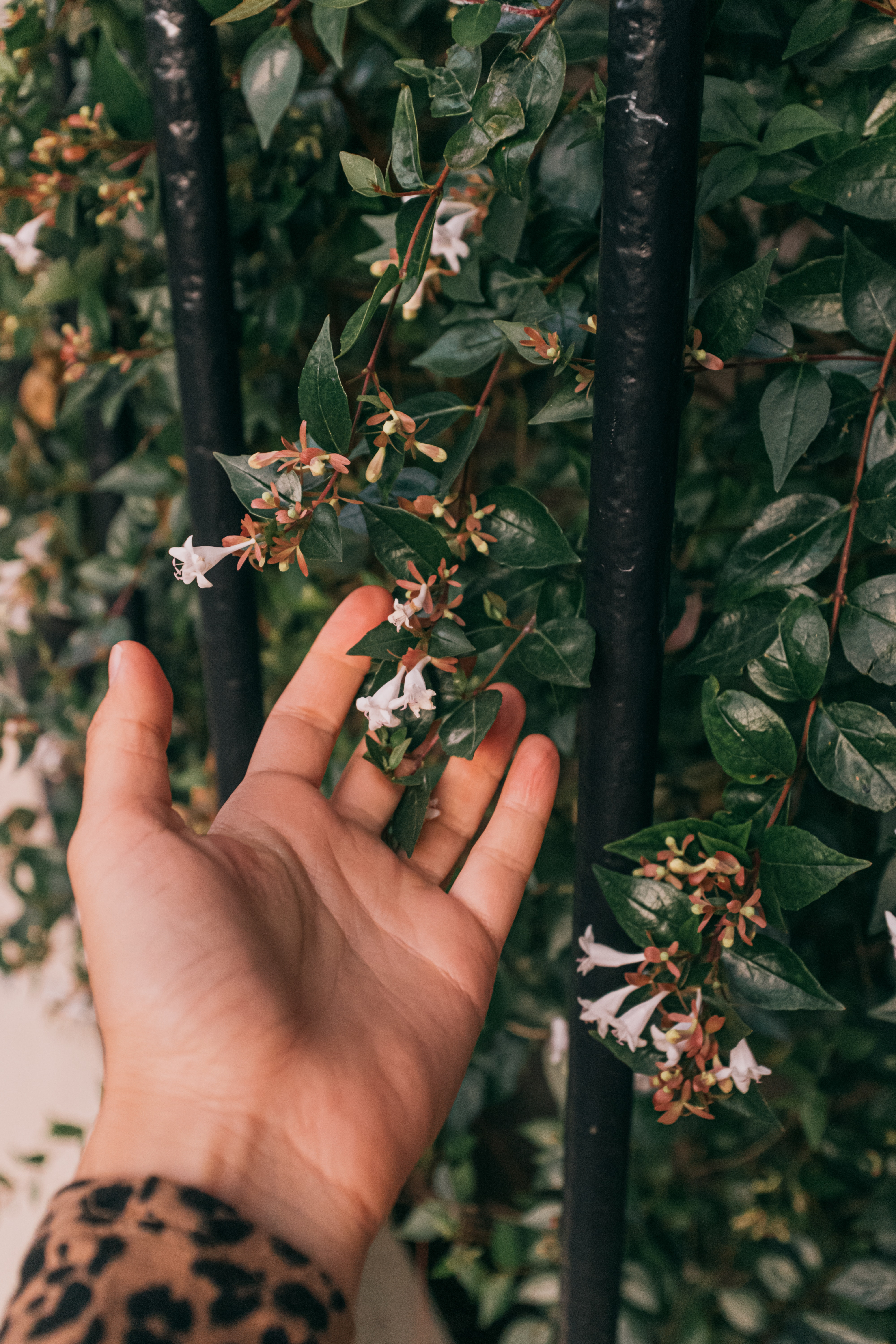 Hand holding small flowers from a shrub