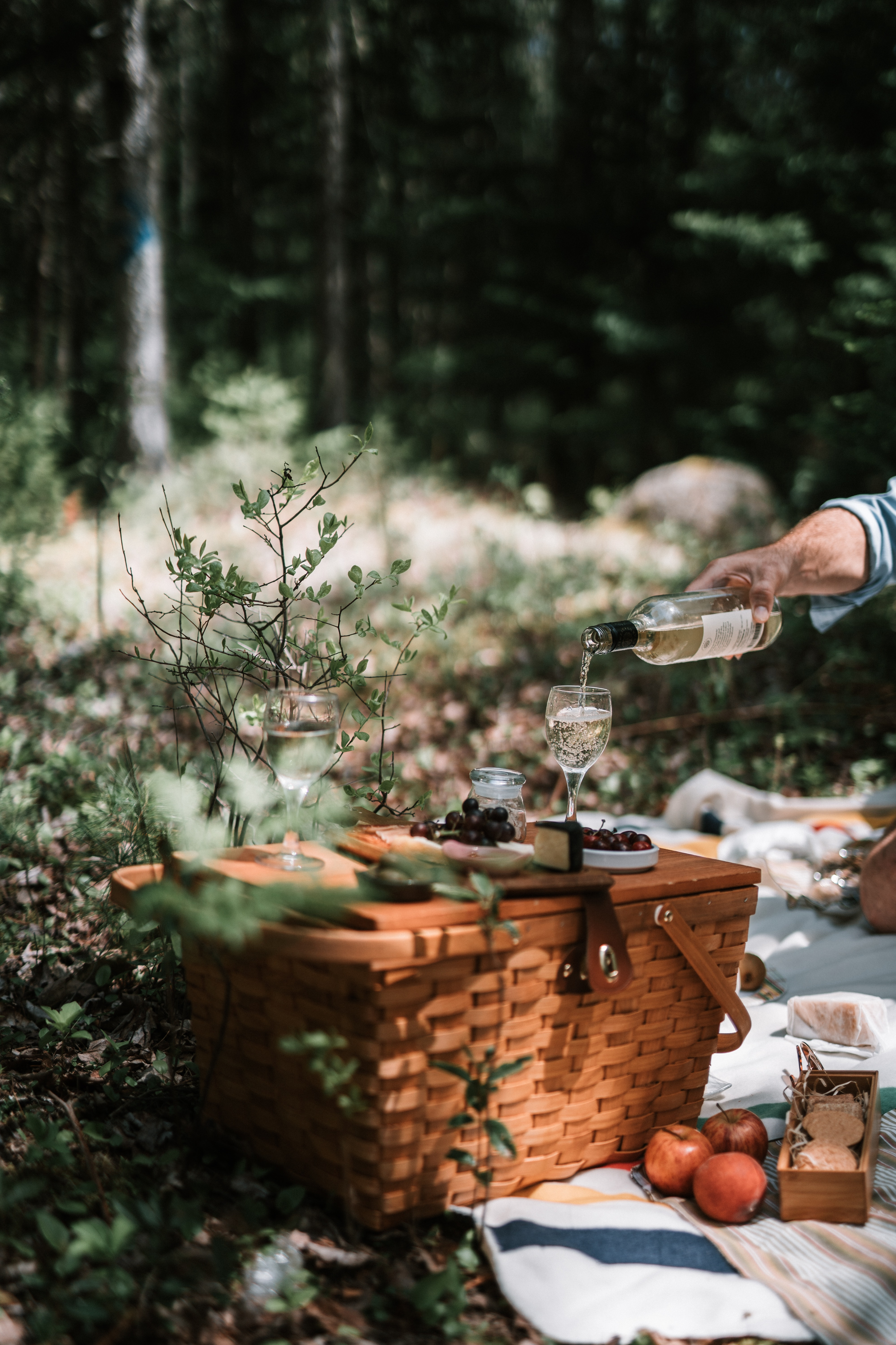Picnic basket set in a forest setting